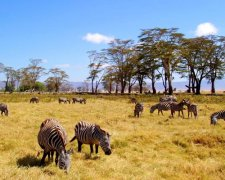 2 Day Private Safari - Lake Manyara and Ngorongoro Crater