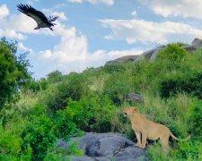3 Days SHARED Safari - Serengeti and Ngorongoro Crater